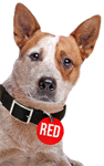 redflag-dog